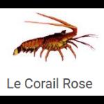Restaurant Le Corail Rose